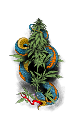 Snake Wrap around in weed